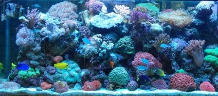 Our Marine Aquarium Display